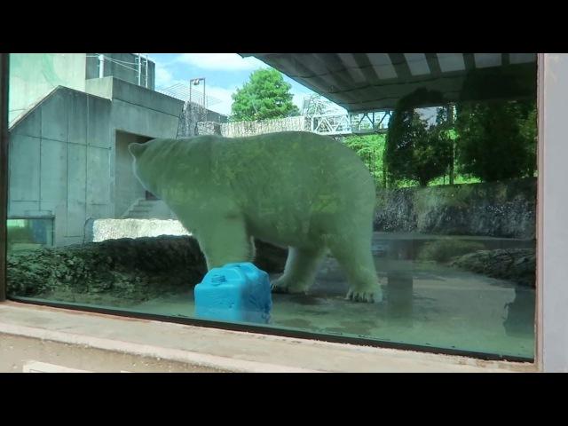 1 July 2017 Pororo at Tokushima zoo, Tokushima, Japan