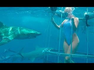 Американскую порнозвезду чуть не съела акула во время съёмок