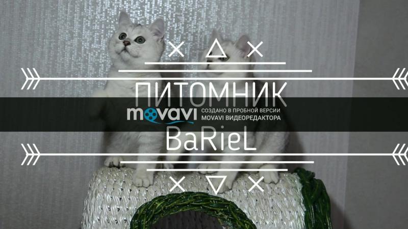 Свободные котята с родословной