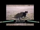Коты джедаи. Эпичные битвы светлой и темной стороны силы!