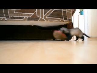 Запасливый хорек (VHS Video)