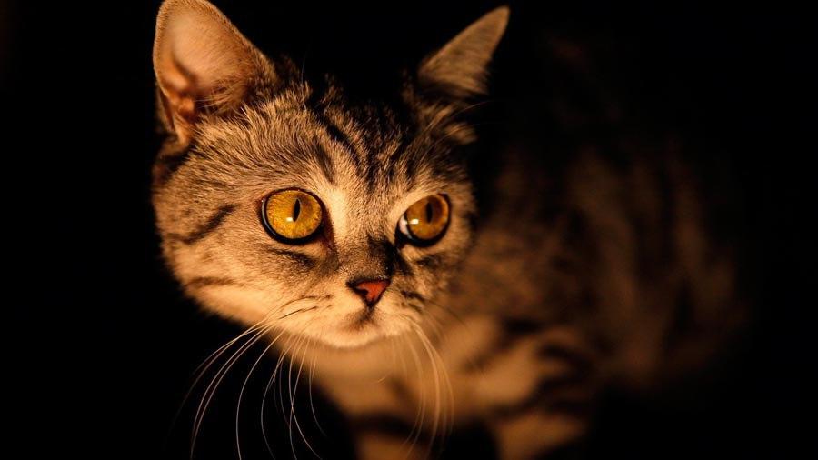 Миф или правда: видят ли кошки призраков?