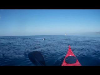 Море, дельфины, каяк