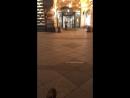 Надежда Петроченко — Live