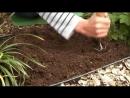 Как сажать луковицы лилий