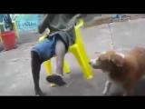 собака лучший друг (враг) человека
