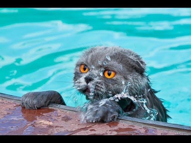 Koty nienawidzą wody - Zabawne i śmieszne koty w akcji