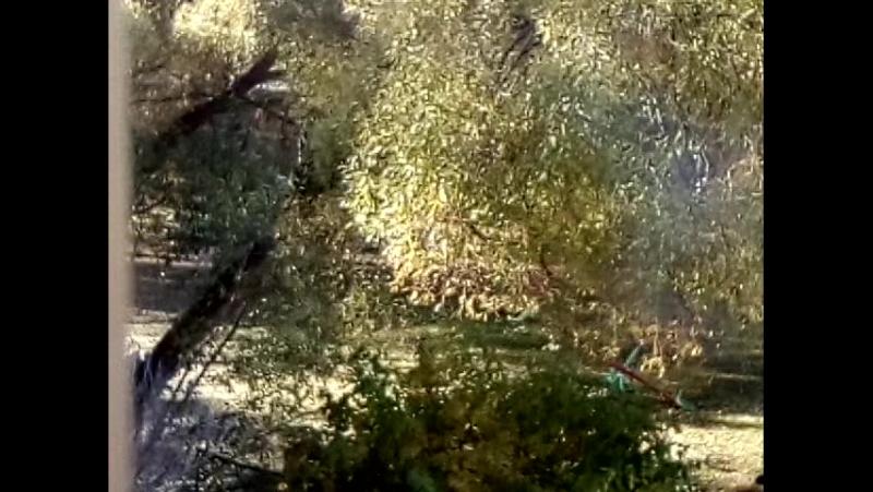Улетели листья...с тополей)