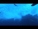 Азорские острова. Часть 1 Акулы, киты, манты 2012 BDRip 720р
