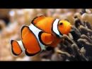 Вечерний стрим 20 минут по игре Feed and Grow Fish