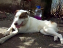 Собаки приюта Лучший друг Маргарита