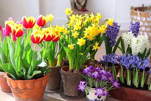 Садовые и домашние цветы