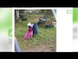 История о том, как нижневартовская собака стала розовой