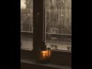 Дожди забренчали сонаты по клавишам мокнущих дней