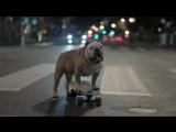 Band of MINI (Bulldog)