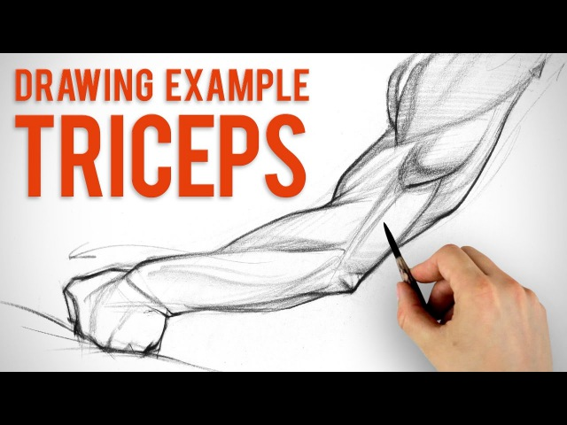 How to Draw Arms - Triceps Assignment Example