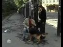 Возвращение Мухтара 4 сезон 30 серия Смешная лошадка