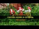 Фолк ансамбль Ольхонские Ворота Скочил козел в огород / Olkhoh Gate ensemble folk jews harp