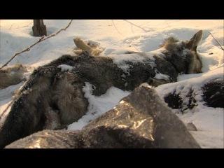 Зоозащитники требуют расследования: на окраине Царёвского обнаружили трупы соб...