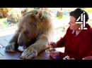 Breakfast With Your Pet Bear Bear About The House Me My Supersized Pet