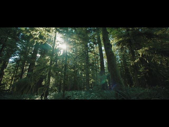 Forest - Ursa Mini 4.6k