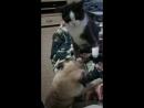 Псина блядь бешеная лезет на кота хули ей надо она тебя убьёт