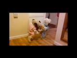 Прикольные коты и собаки в костюмах. Смешное видео! Funny cats and dogs in costumes