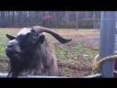 Лучшие ремиксы животных 2К17 __ 2