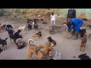 Мужчина больше не мог смотреть, как страдают собаки и создал для них приют