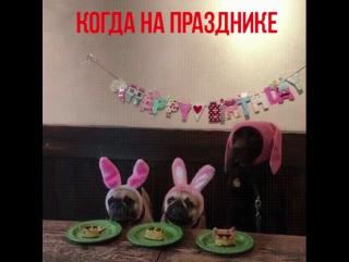 когда на празднике торт от Кусочка счастья