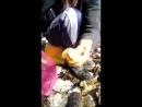 Вчерашний циклон выбросил тонны свежего гребешка в Анивском заливе 1