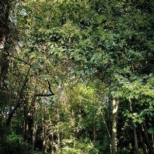 Jardín de la Croix