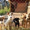 Приют для бездомных животных ГАВ Официальная гр