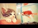 Рыбки могут быть милее котят - Самые дружелюбные и игривые рыбки