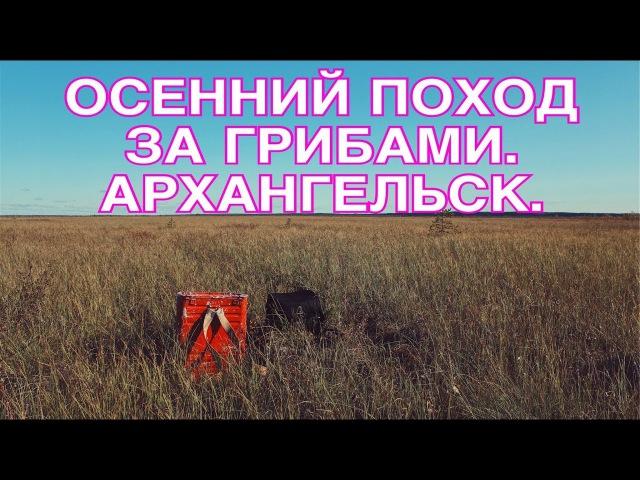 Осенний поход за грибами. Архангельск.