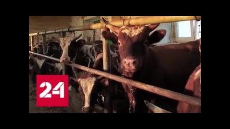 Большая ферма. Специальный репортаж Михаила Терентьева - Россия 24
