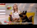Одна з найвпізнаваніших молодих актрис - Розмова за чашкою чаю з Анною Кошмал