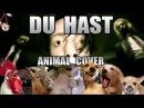 Rammstein Du Hast Animal Cover