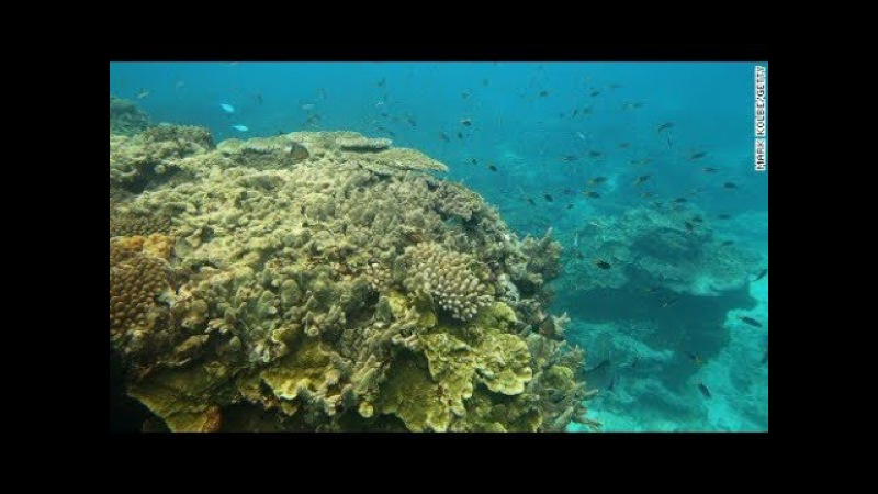 Watch the Great Barrier Reef create new life