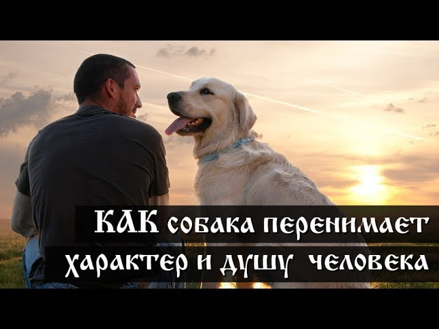 КАК собака перенимает характер и душу человека.