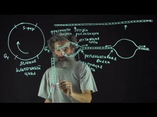 Цитология. Лекция 55. Репликация ДНК