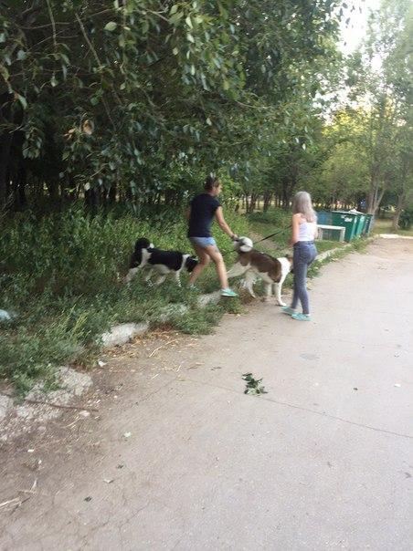 Собаки на Воронежских чувствуют себя вольготно!!!   Парк «Воронежские