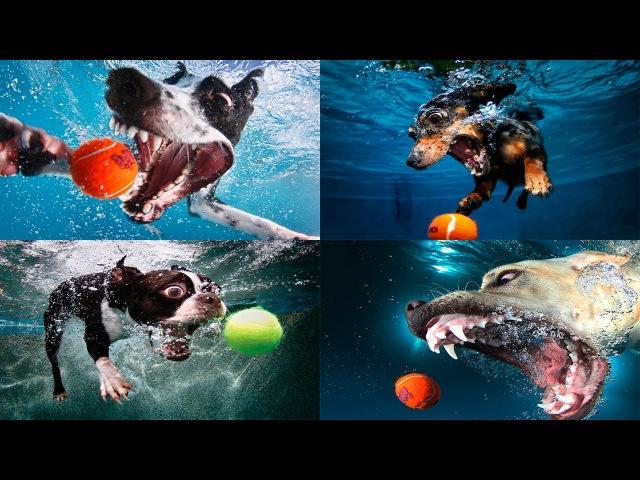 Жизнь собак На что способны собаки Discovery Channel