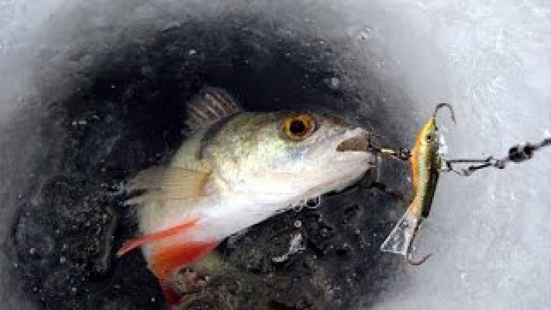 Зимняя рыбалка. Уроки ловли на балансиры от профи - часть 2. Ловля окуня на баланс ...