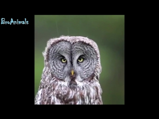 ПРИКОЛЫ С ЖИВОТНЫМИ (смешные птицы) _ FUN WITH ANIMALS (funny birds) _61 (online-video-cutter.com)