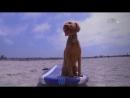 «Пёс-ТВ» 2 серия Развлекательный, животные, собаки, 2016