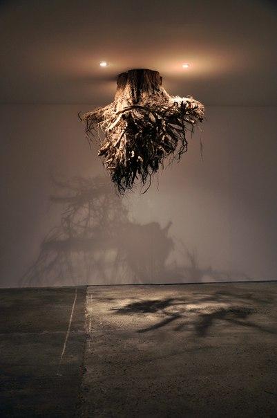 Оригинальная инсталляция Humus из корней