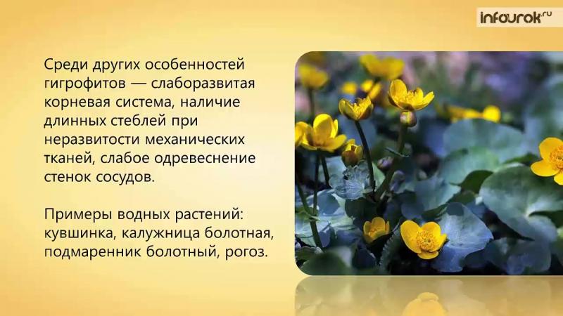 40. Характеристика основных экологических групп растений. Растительные сообществ
