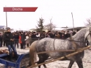 Curse de cai la nordul Moldovei! - Drochia 23.01.2017