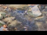 Headstrong feat. Stine Grove - Tears (Aurosonic Progressive Mix) 720p